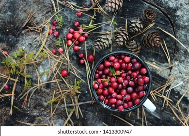 Ripe cranberries in a mug on a stump in the woods. Cranberries and cones on a wooden background. Background of sweet red berries. Christmas traditions and drinks