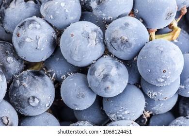 Ripe dark grapes, background