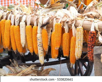 Ripe dried corn cobs hanging on the old wooden wagon