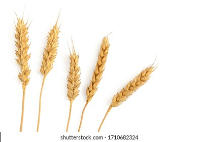 Ripe ears of wheat isolated on a white background. Top view, flat lay - Shutterstock ID 1710682324