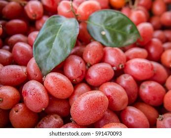 Ripe Elaeagnus latifolia fruits