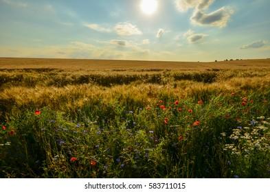 Ripe field of wheat.