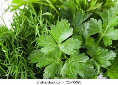 Ripe fresh green parsley isolated on white background