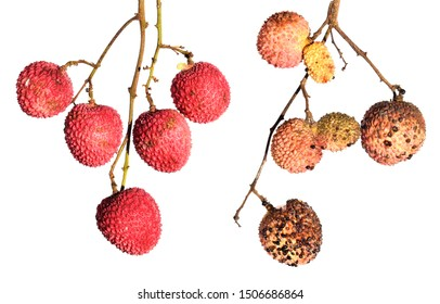 Ripe fresh lychee fruit and damaged by Scale insect, hemispherical scale, helmet scale or coffee brown scale, Saissetia coffeae (Hemiptera: Coccidae). Isolated on a white background