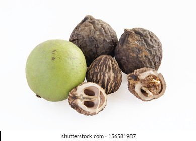 ripe fruit of black walnut tree