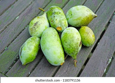Ripe fruit of the common pawpaw (asimina triloba)