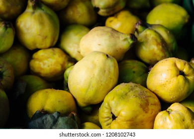 ripe fruit of quince after autumn harvest