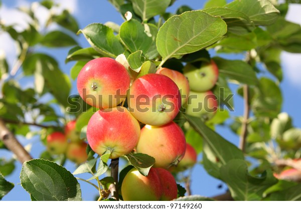 Ripe fruits on a background of the sky
