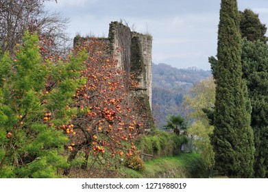 ripe fruits on persimmon trees in december, Arona, Italy