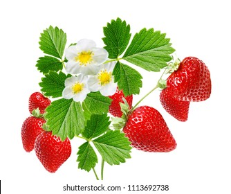 ripe garden freshness strawberries