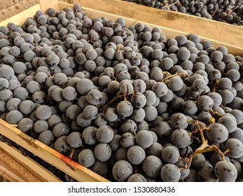 Ripe Isabella grapes in a wood box. Dessert fruit.