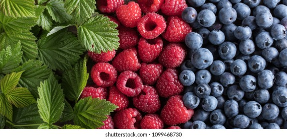 Ripe and juicy fresh picked berries closeup. Blueberry and raspberry background.Top view .