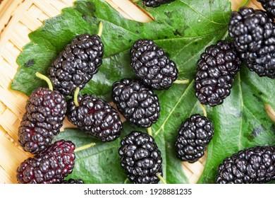 Ripe large black mulberries,close up