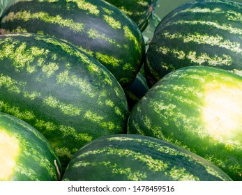 Ripe large striped watermelons neatly stacked side by side. Background of lying ripe watermelons