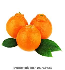 Ripe mineola fruits or orange tangerine isolated on white background.