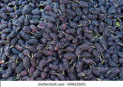Ripe mulberries background. Mulberry - Morus - healthy fruit close up background.Purple mulberry fruits background.Mulberry berries black close-up, background.