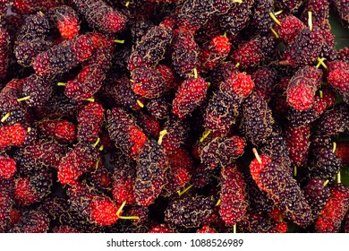 ripe mulberry fruit   is a sweet and sour fruit on white background healthy mulberry fruit food isolated