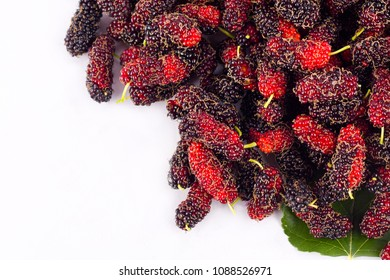 Ripe mulberry (Morus)  is black and red on white background healthy mulberry fruit food isolated