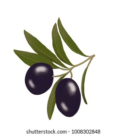 Ripe olives on a green branch on a white background.Ripe olives.