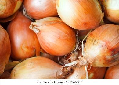 Ripe onions.