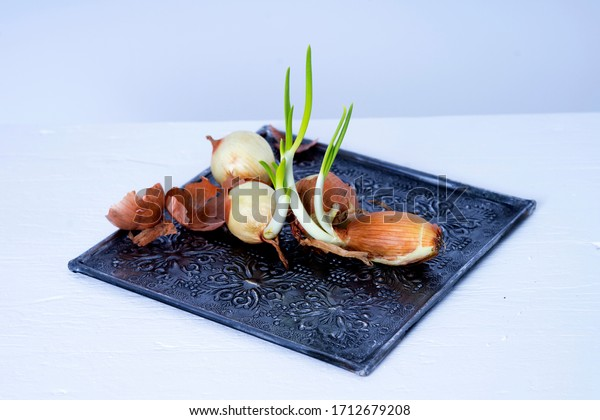 Ripe onions with young green shoots on an ethno metal tray with ornamnets