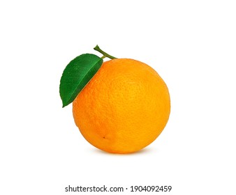 ripe orange on a branch on a white background