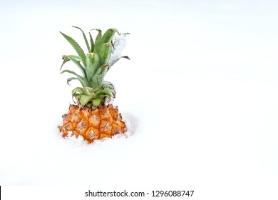 Ripe organic baby pineapple in snow. Bright sweet tropical fruit in winter outdoors.Spring coming concept. Travelling to warm countries at winter