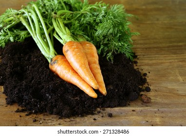ripe organic carrots with green leaves on the ground