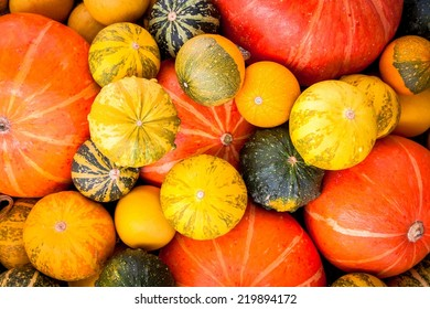 ripe organic colored pumpkins as a background