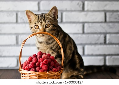 Ripe organic raspberries in a brown basket and a young tabby cat. Soft focus.