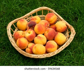 Ripe peaches in the basket on the grass