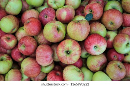 ripe picked apples in a box