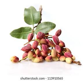 Ripe pistachios