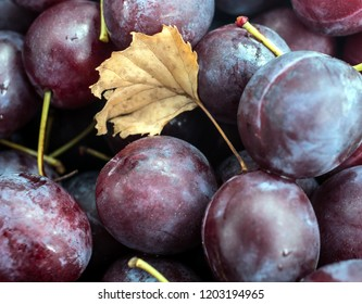 ripe plums and a fallen leaf
