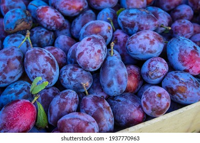 Ripe plums. Plums with a few leaves. Close up of fresh plum, top view. Macro photo food fruit plums. Texture background of fresh blue plums. Image fruit product. D'Agen French prune plum.
