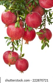 Ripe pomegranate fruit  on  tree branch.