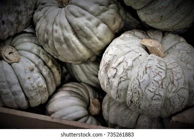 Ripe pumpkin. Halloween