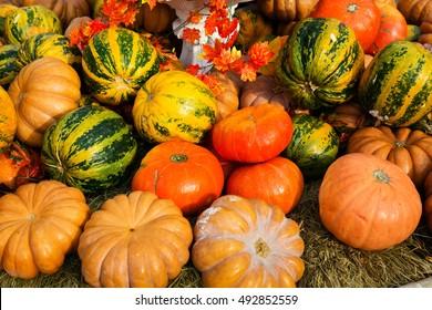 Ripe pumpkins for halloween