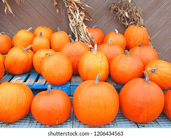 Ripe pumpkins at outdoor stall as growers get ready for Halloween