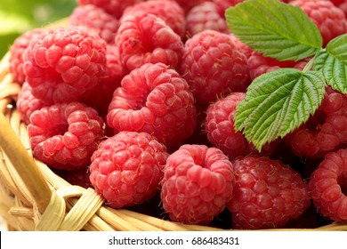 Ripe raspberry basket with leaf