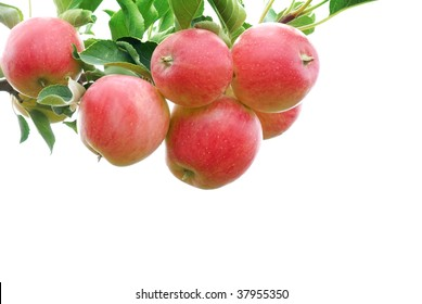 Ripe red apples with branch isolated on white