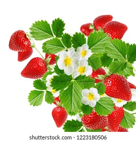 ripe red fresh strawberries on white