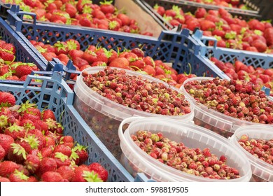 Ripe red strawberries containers on the counter, background