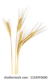 Ripe rye spikelets isolated on a white background