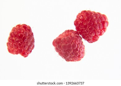Ripe single raspberry as design element on a white background