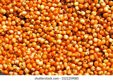 a lot of ripe sorghum seeds