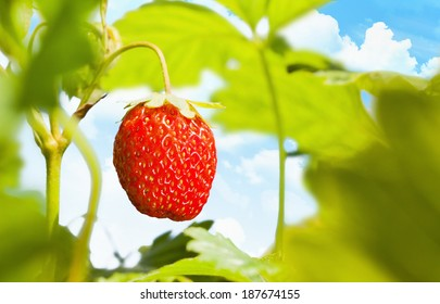 Ripe strawberry close up on a background of blue sky with clouds
