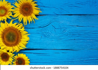 ripe sunflowers on an old wooden background. sunflowers on a wooden table with copy space