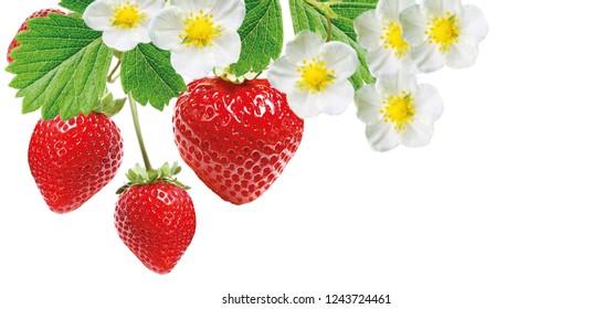 ripe tasty freshness strawberries