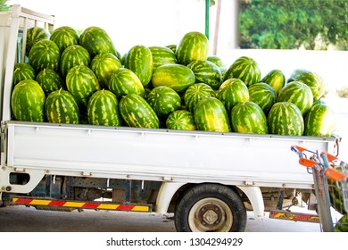 Ripe watermelons lie in a pile for sale in a trailer in the summ